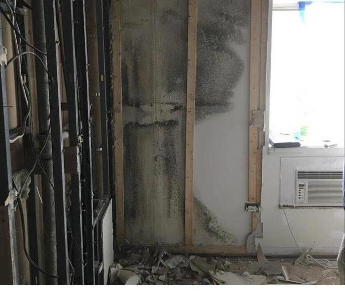 Mold Remediation in PA