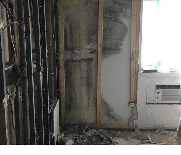 Mold Remediation What You Need To Know About Mold