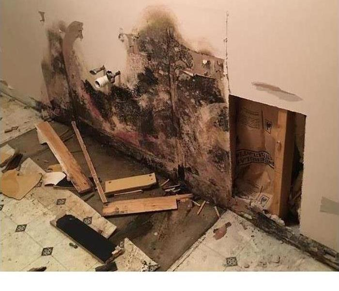 Mold Remediation Mold Grows Faster Than You Think